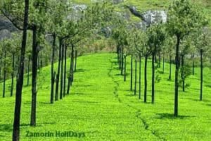 Munnar_honeymoon_Package