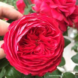 rose-garden-munnar-images
