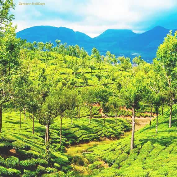 4 nights 5 days kerala tour package